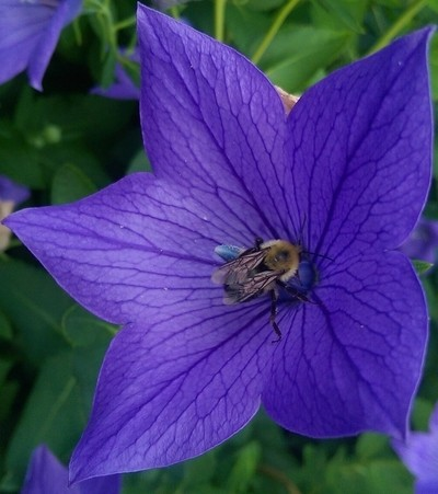 Beeing Blue