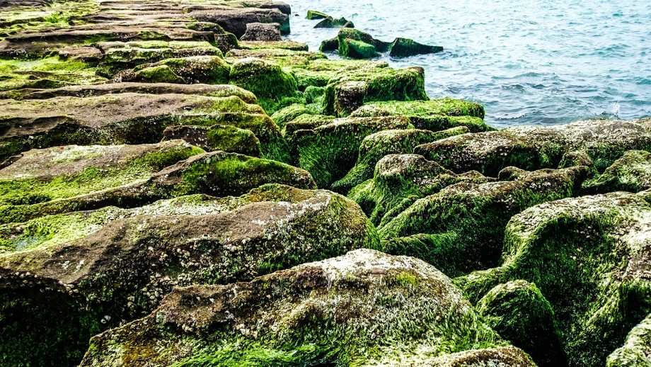 The Green Reef...
