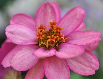 little flowers in a flower