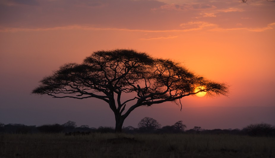 It was sunset time and got this beautiful silhouette of the acacia trees in Tarangerie Park in Ta...