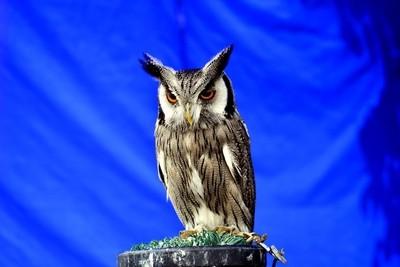 Owl......Stratford Apon Avon