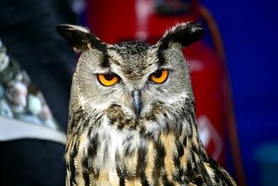 Smart Owl;)