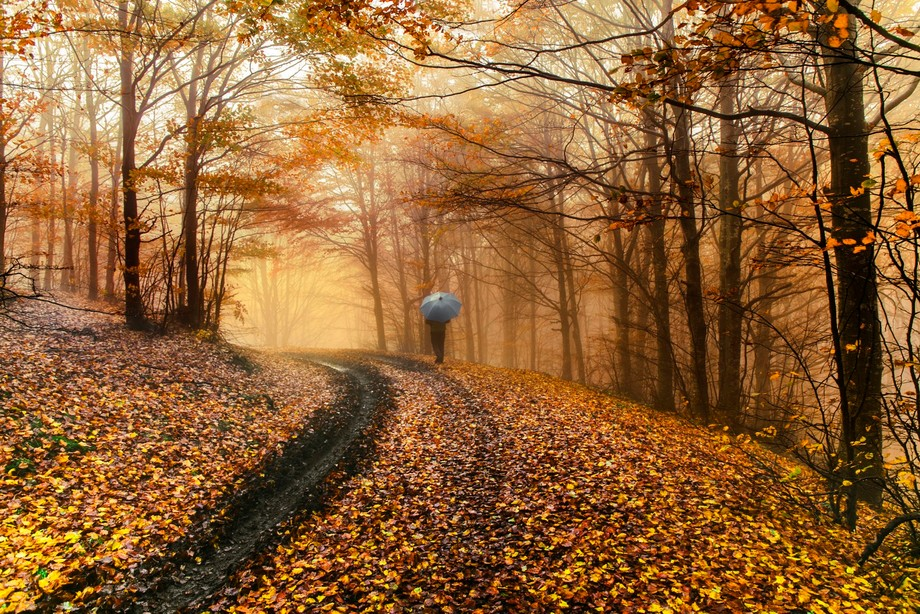 The charm of a walking in a misty autumnal wood