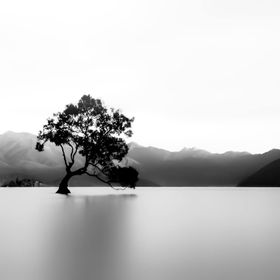 Lonely this tree keep watch over the waters of Lake Wanaka.
