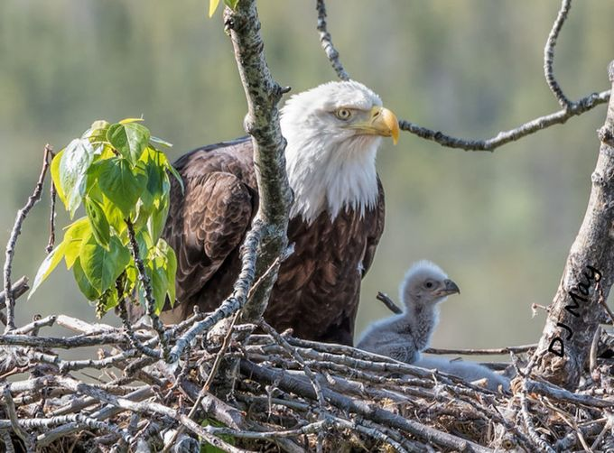 i look just like you Mom. by DJMay - Majestic Eagles Photo Contest
