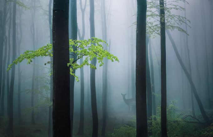 Spring forest by swqaz - Mist And Drizzle Photo Contest