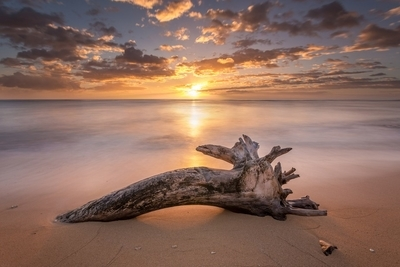 Beach Tree Sunrise