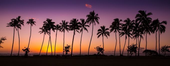 Before Sunrise in Kauai by PierreLeclercPhotography - Palm Trees Photo Contest