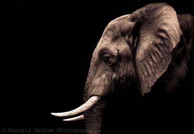 The Elephant (2)