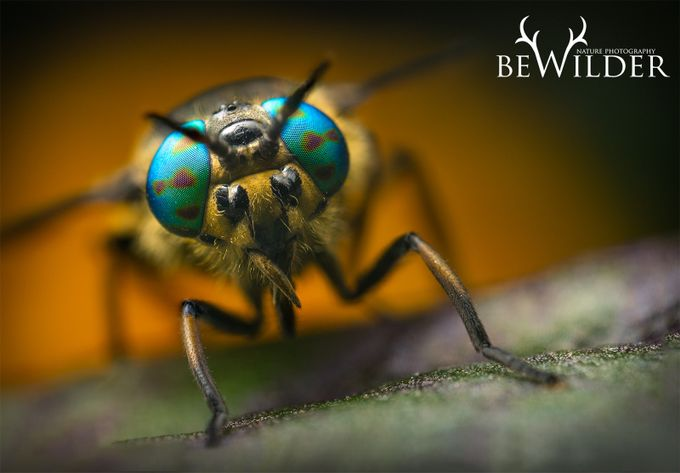 Deer Fly by GeraintRadford - Monthly Pro Vol 24 Photo Contest