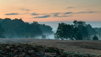 Misty Morning Bergerheide