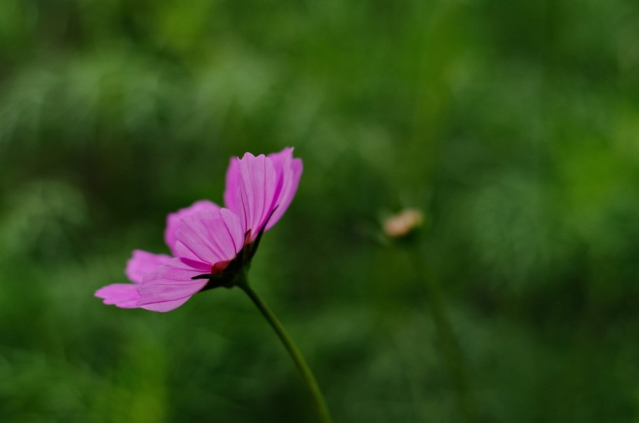 A flower captured with a very shallow depth of field and creative composition. The front petals a...