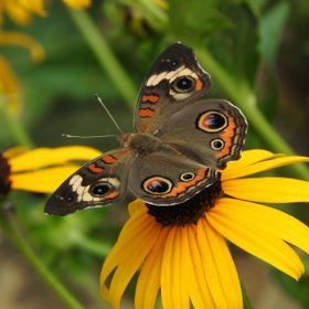 I was taking differant shots of all the butterflies in the flower garden, playing with differant settings on my camera when I was fortunate to ge...