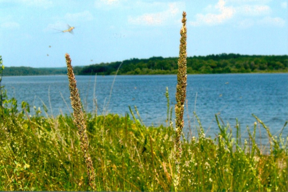 Beautiful little lake in Eastern Oklahoma