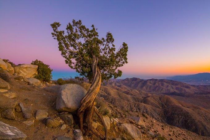 Juniper Tree by s_cavazos - Unforgettable Landscapes Photo Contest by Zenfolio