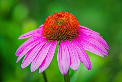 Flower Photography.