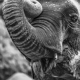 This gorgeous elephant at Auckland Zoo took a liking to me and my camera, she came up really close. I just loved the way she kept one eye on me.