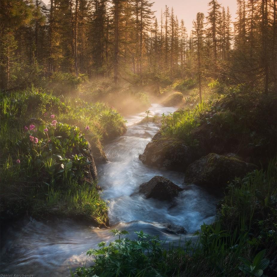 Forest stream by DanielKordan - Streams Photo Contest