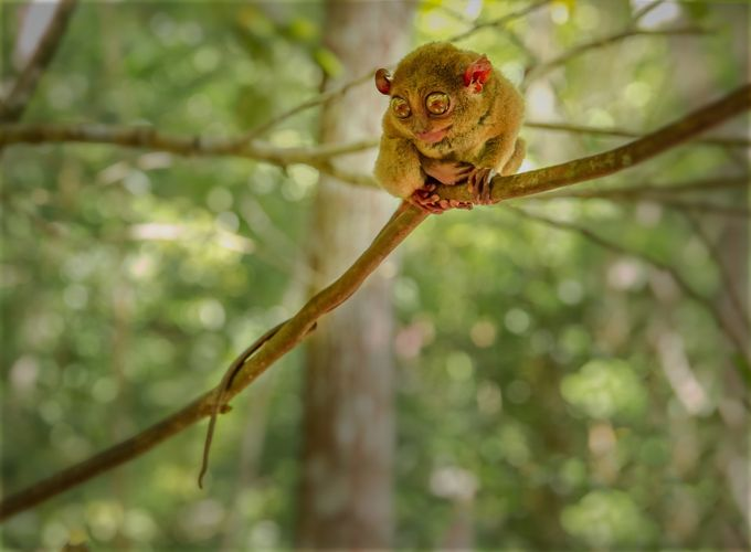 Tarsier Pose by GigiJim08 - Happening At The Zoo Photo Contest
