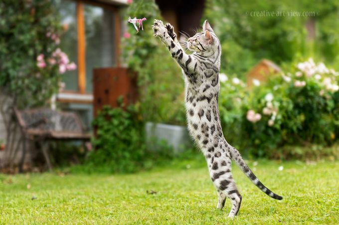 catch it ! by CreativeArtView - Monthly Pro Vol 24 Photo Contest