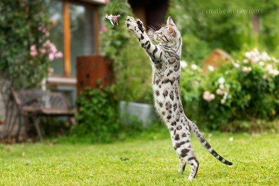 catch it !