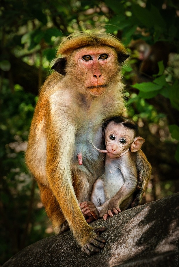 Lunch time by ankanikitina - Monkeys And Apes Photo Contest