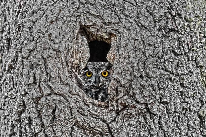 Peek by CutsnShoots - Beautiful Owls Photo Contest