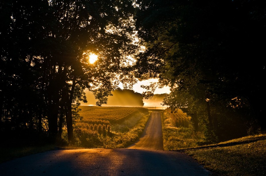 What's beyond the trees just down that road?  A sunrise with fog over fields lets the im...