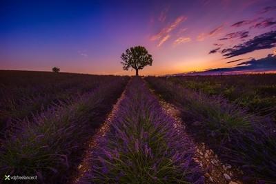 Dawn in Valensole
