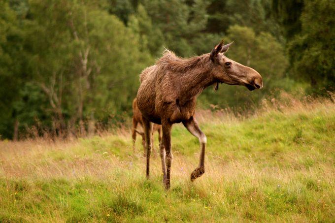 DSC01897 by christiangilder - Big Mammals Photo Contest