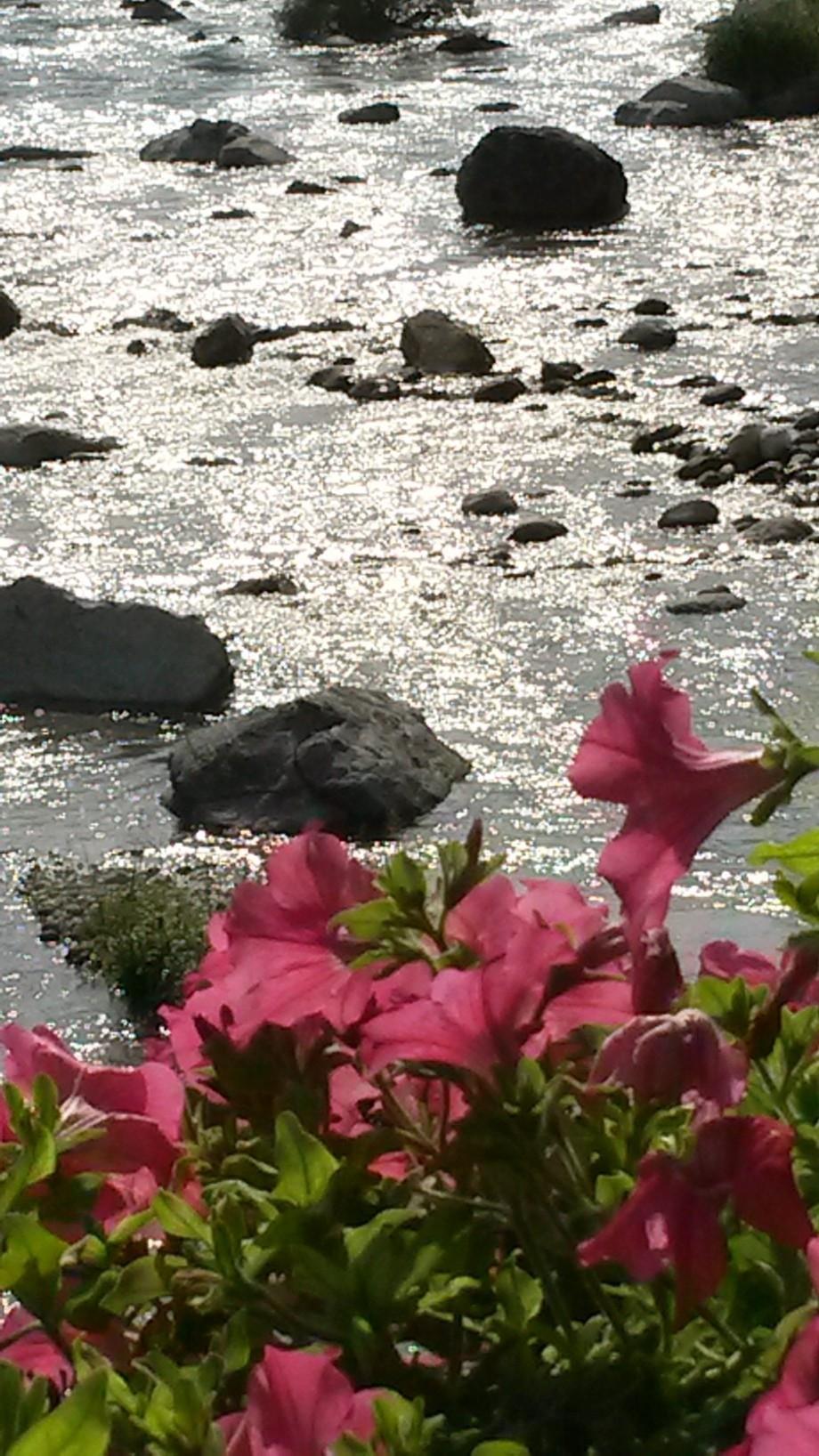 Flowers on The river bridge