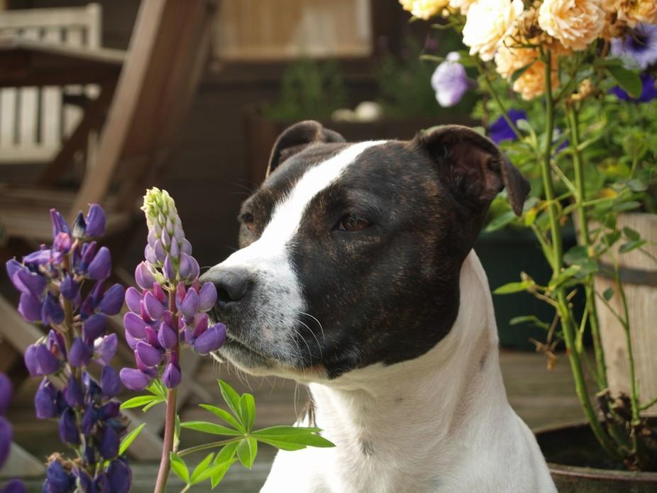 smelling te flowers