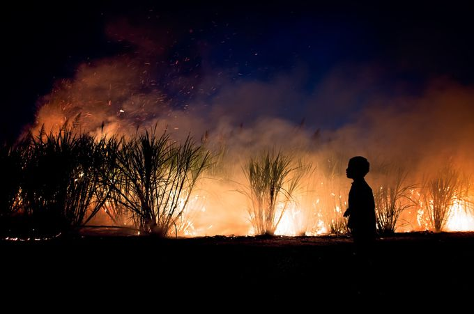 Cane fire by cynthiajackson - Capture The Four Elements Photo Contest