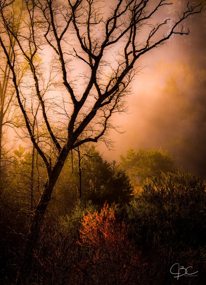 Burning Bush by mrjcall - Silhouettes Of Trees Photo Contest