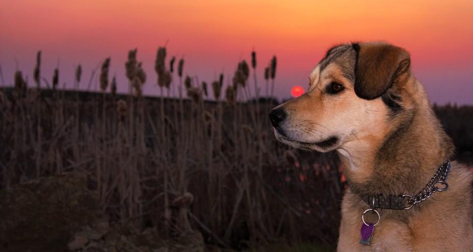 Bestfriend Firesmoke Sunset