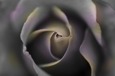rosa tuneada