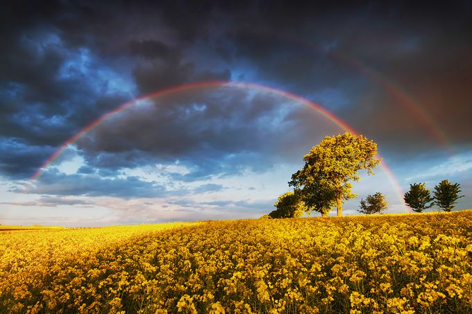 Canola Fields and Rainbow (California 2010) by DAVIDBLAKLEYPHOTOGRAPHY - Rainbows Overhead Photo Contest