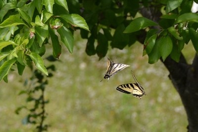 Saturday's butterflies 572