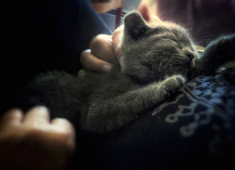 Luna Joy on mammas lap