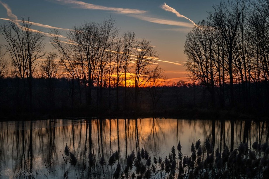 Sun setting, creating reflection of sky and trees on a still pond.