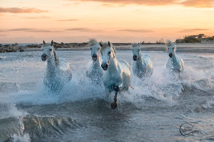Camarague372 by kathycline - Animals And Water Photo Contest
