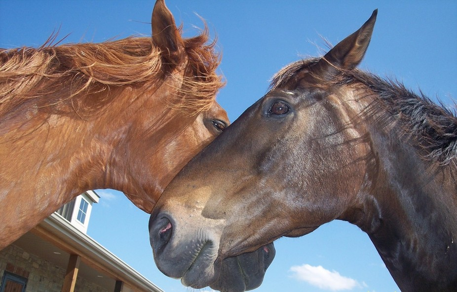 Horses sharing the love