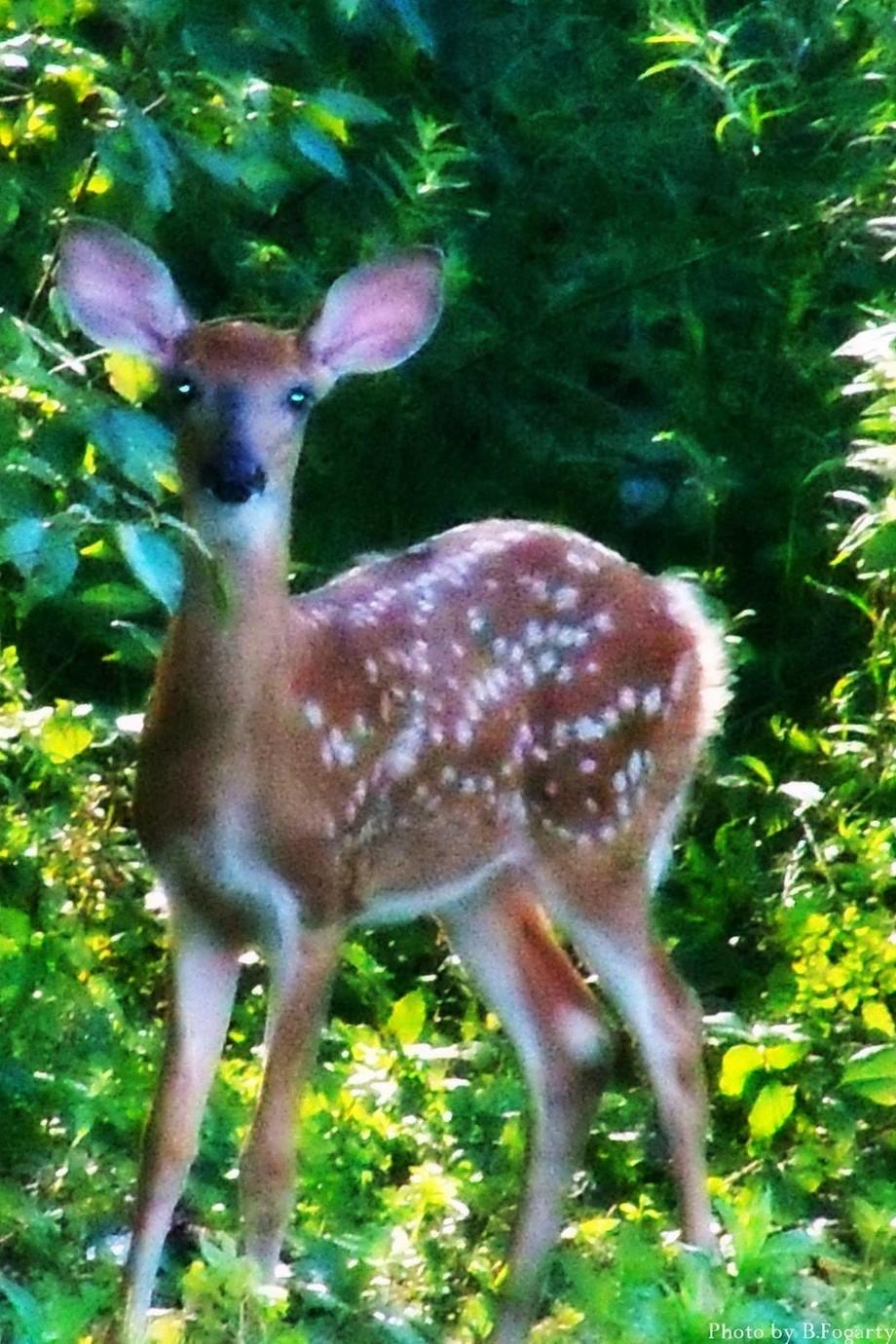 Oh ~Deer