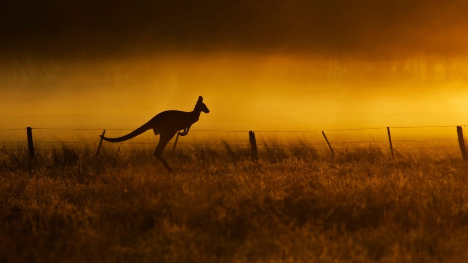 This was an image that came by chance on a foggy sunrise and I was caught with out a tripod so ha...