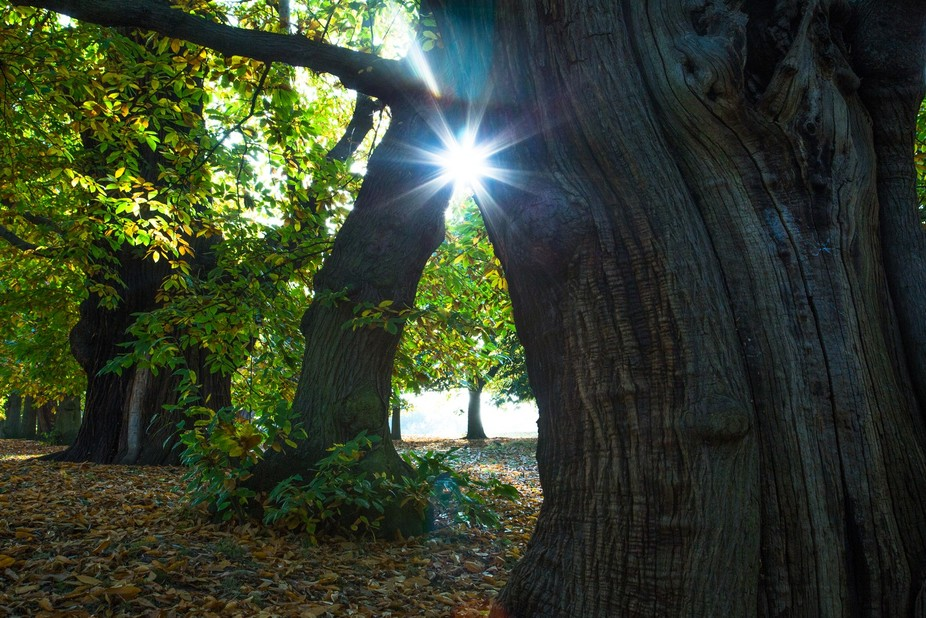 Captured the Sun rays seeping in through the angle between these two trees. I loved the shiny glo...