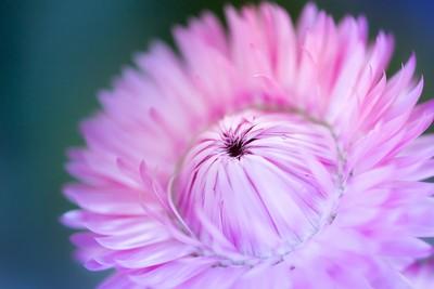 pinkblast