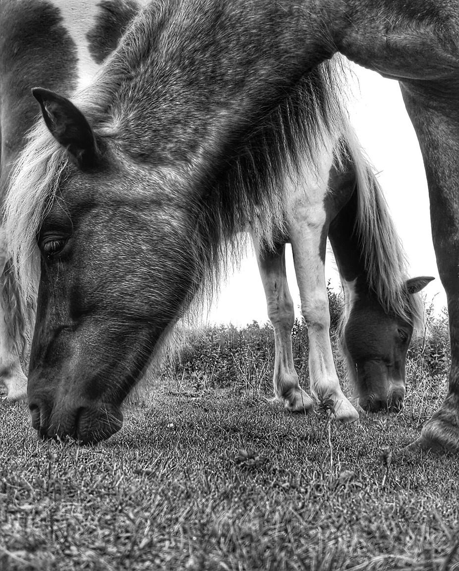 Framed by bobdiller - Opposites Photo Contest