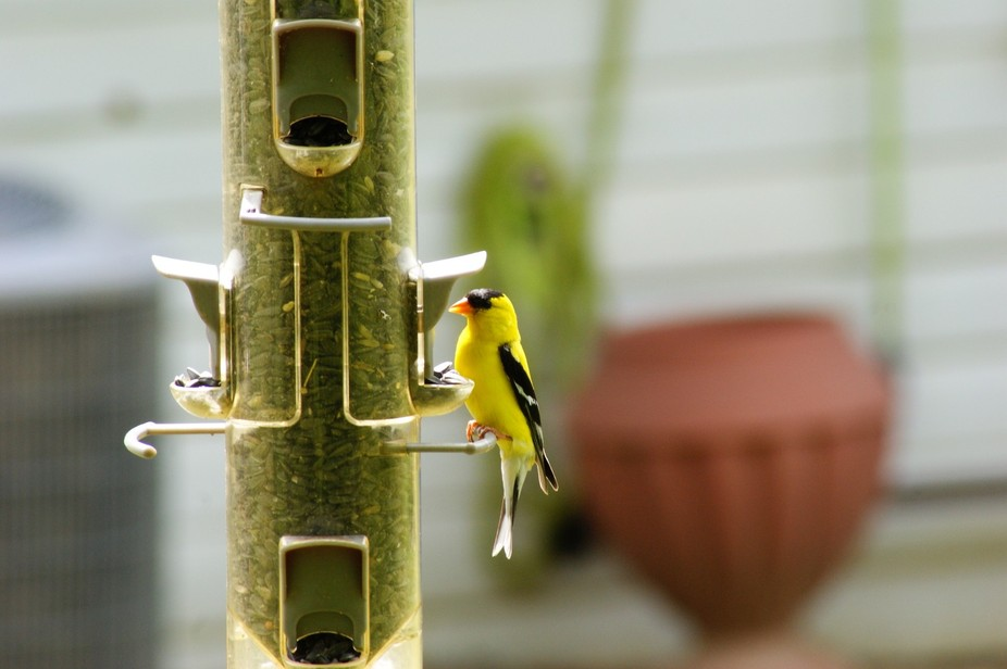 Just happened to see this one on the feeder