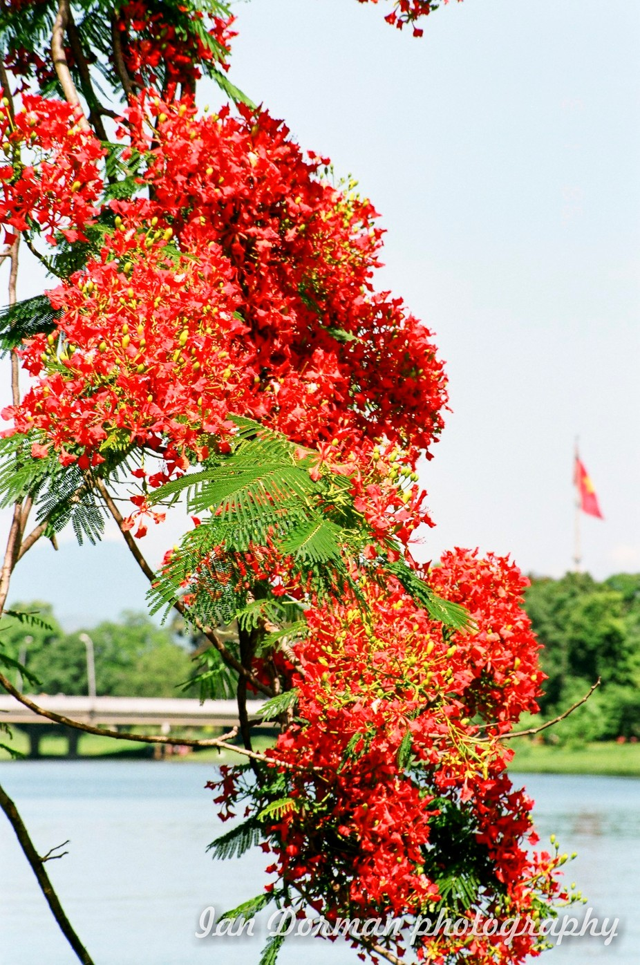 Colourful flowers in Vietnam