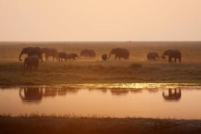 Elephants in mist